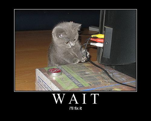 kitten_fix.jpg